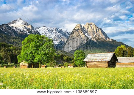 Beautiful Alpine spring rural landscape with flowering valley meadow and morning sunlight mountains