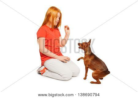 Ginger girl training her friendly miniature Pincher to give a paw