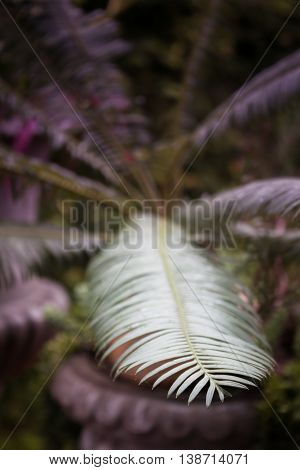 Green leaves in home garden-selective focus, stock photo