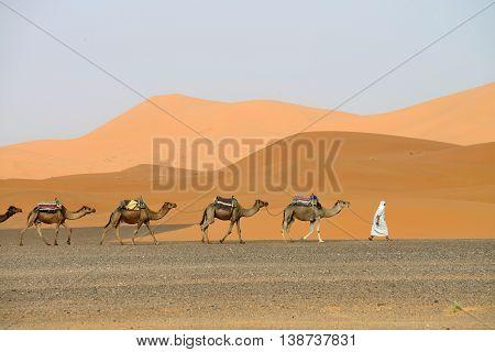 SAHARA, MOROCCO - JULY 12: Camel caravan going through the sand dunes, July 12, 2013 in Sahara Desert, Morocco. Sahara Desert very popular tourist place in east Morocco.