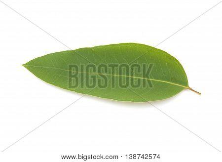 Fresh Eucalypus Leaves Isolated On White