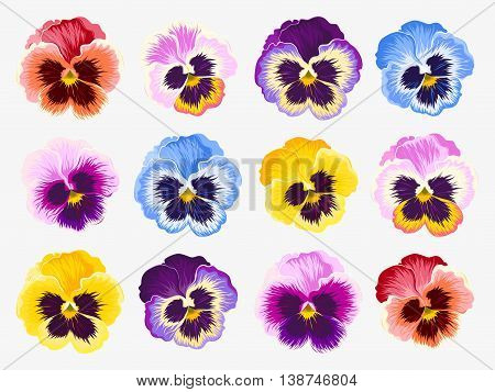 Vector set of vibrant detailed pansy flowers