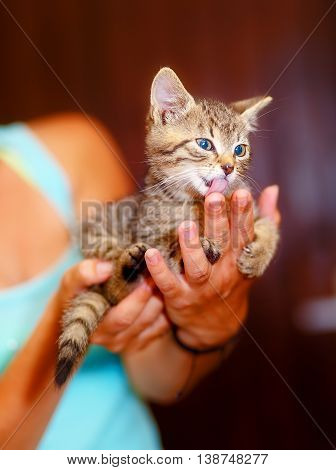 Adorable Sweet Little Pussycat In Hands Of Young Girl.