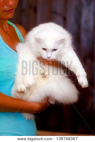 Adorable Sweet White Furry Pussycat In Hands Of Young Girl.