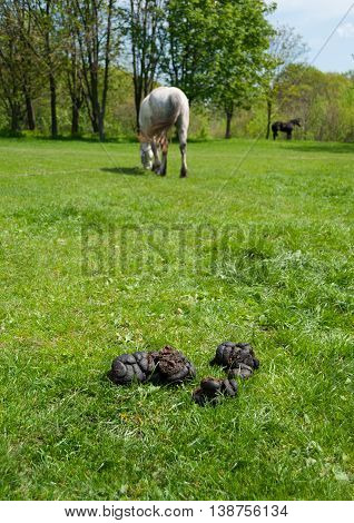 Landscape with dung grass and horses (shallow dof)