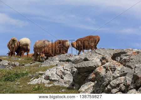 group of sheep walking on mountain top