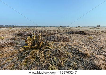 Frozen Moorland In Winter At Veluwe The Netherlands