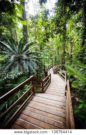 The famous Jindalba Boardwalk thru ancient rainforest in the Daintree region of Queensland, Australia
