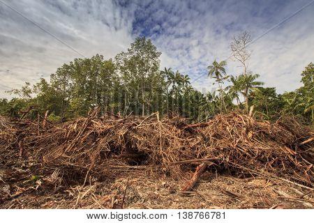 Deforestation environmental damage Indonesia rainforest