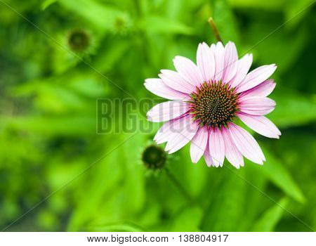 Flower With Green Background for a Illustration