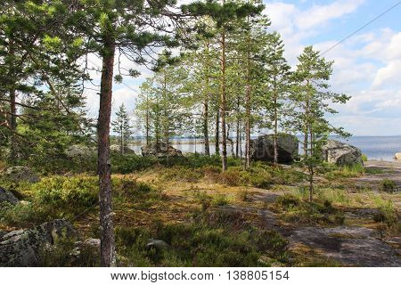 Beautiful nature wild of Finland and stones