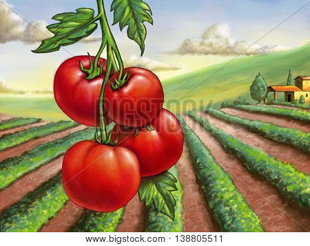 Ripe tomatoes and rural landscape. Digital painting.