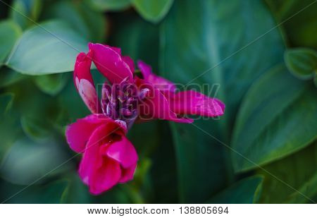 Red Flowers with Green Background in a Garden