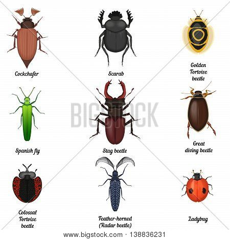 Insect icons set. Beetle bug icon entomological collection. Top view of beetles and bugs