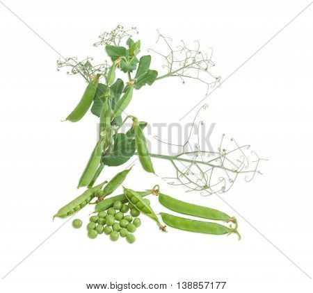 Several fresh green peas shelled from the pods several pods of a peas and branch with pods and leaves on a light background