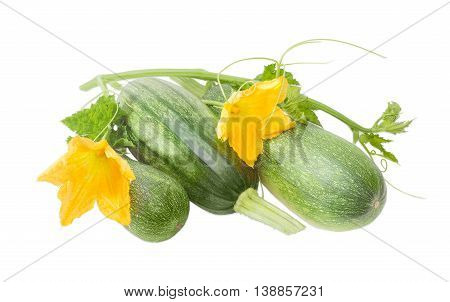 Several fresh green zucchini and stalks with leaves tendrils and flowers on a light background