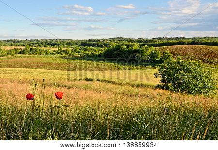 Hilly uncultivated fields in summer. Central Europe.