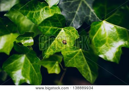 Close-up Of Ladybug Resting On Leaf In Garden