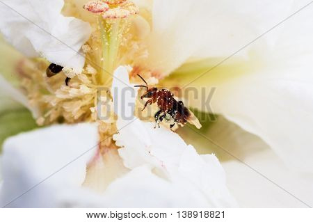 Bee is busy eating harvesting honey from yellow white flower