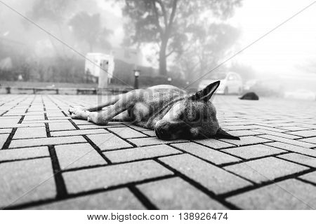 Dog Takes a Nap on the Sidewalk in Hong Kong