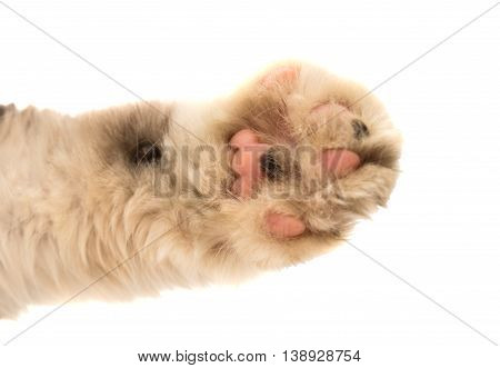 Detail of a cat paw photo isolated on a white background.