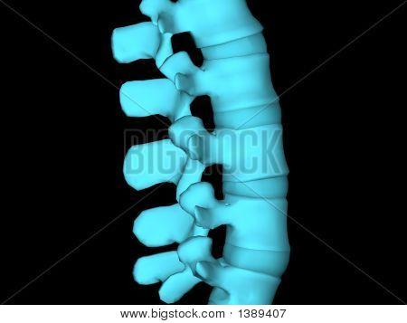 Xray Spine