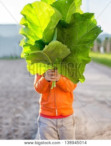 child holding a bunch of leaves. Kid hid his face behind a huge burdock leaves
