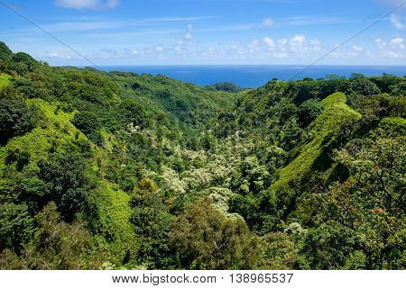 Landscape View Of Jungle And Valley On Road To Hana, Maui