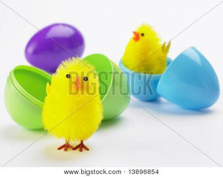 Easter Chicks Hatching Out Of Egg