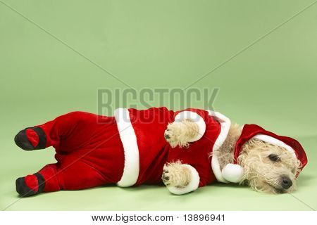 Samll Dog In Santa Costume Lying Down poster