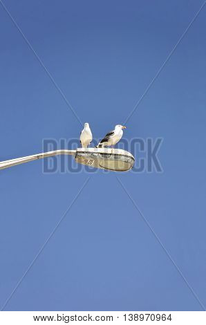 Two seagulls perch on top of a light pole.
