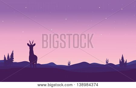 Silhouette of zebra in hills at night