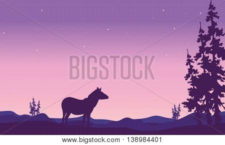 Zebra landscape in hills silhouette at night