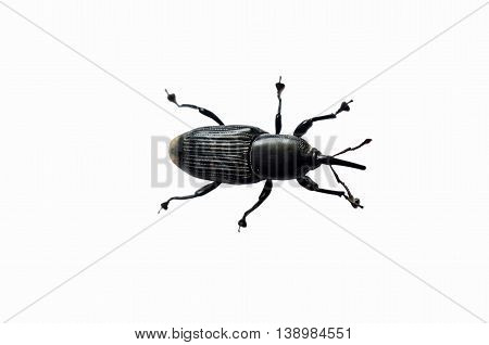 One thai insect on the white background