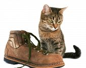 Cat and boot poster