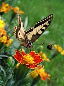 Beautiful butterfly on beautiful flower with some flowers in the background poster