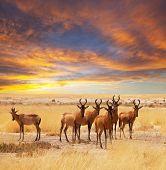 antelope crowd poster