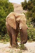Elephant  in savannah poster