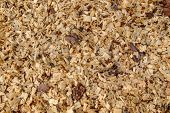 Background of fresh wood shavings. Texture of the shavings from cutting and sawing trees. Rudiment of billets of firewood in the forest. poster