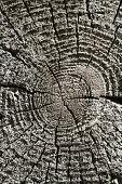 A natural background - old tree stump in closeup poster