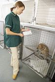 Veterinary Nurse Checking Sick Animals In Pens poster
