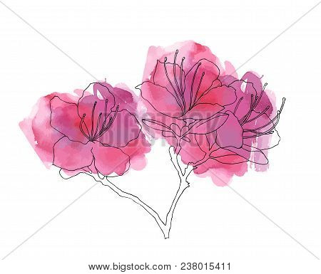 Hand Sketched Rhododendron Ledebour Branch With Watercolour Texture. Vector Illustration Pink Flower