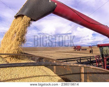 Mato Grosso, Brazil, March 01, 2008. Mass Soybean Harvesting At A Farm In Mato Grosso