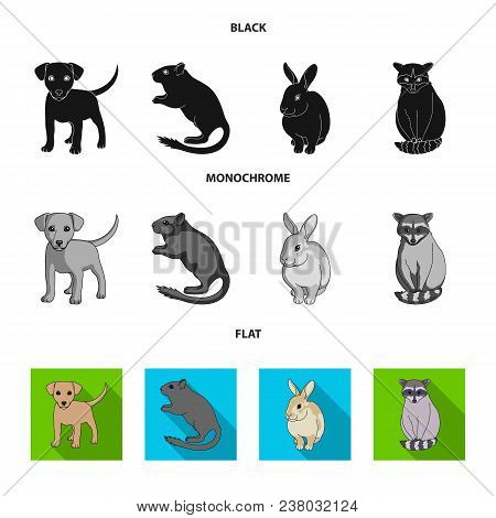 Puppy, Rodent, Rabbit And Other Animal Species.animals Set Collection Icons In Black, Flat, Monochro
