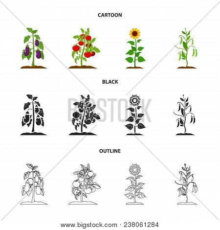 Eggplant, Tomato, Sunflower And Peas.plant Set Collection Icons In Cartoon, Black, Outline Style Vec