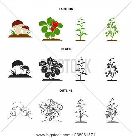 Mushrooms, Strawberries, Corn, Cucumber.plant Set Collection Icons In Cartoon, Black, Outline Style