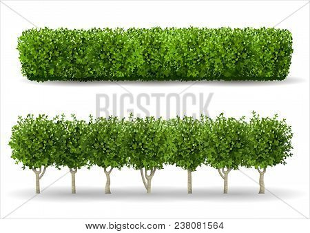 Bush In The Form Of A Green Hedge. Ornamental Plant. The Garden Or The Park. Set Of Fences. Vector G