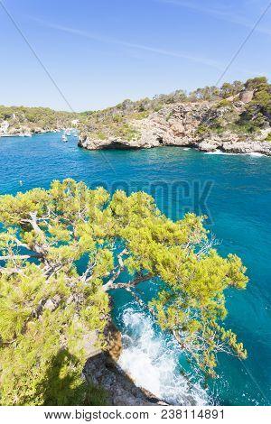 Cala Figuera De Santanyi, Mallorca, Spain - A Huge Old Tree Above The Cliffs Of Santanyi