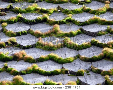 Background Of The Moss In Wooden Roof