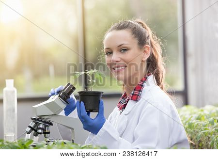 Agronomist With Seedling In Flower Pot In Greenhouse